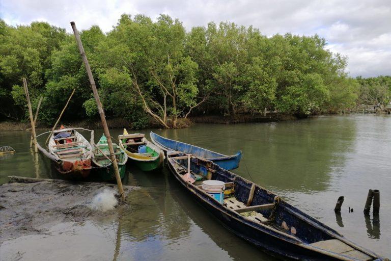 Mangrovie a Taliptip