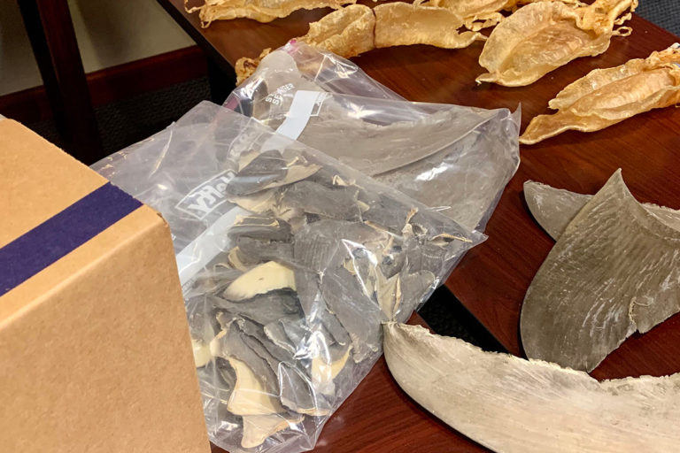 Shark fins and Totoaba fish bladders seized by U.S. federal authorities in raids during Operation Apex. Image by U.S. Department of Justice.