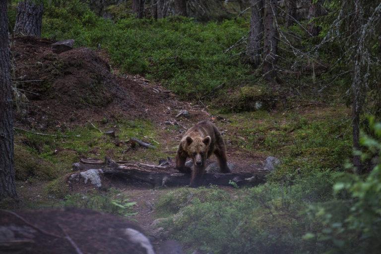 Sweden ecotourism 01 copy