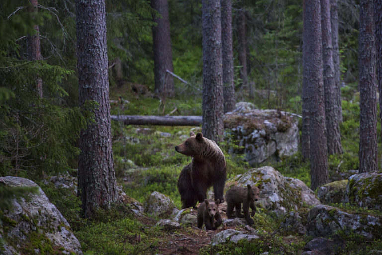 Sweden ecotourism 02 copy