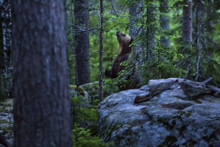 Sweden ecotourism 03 copy