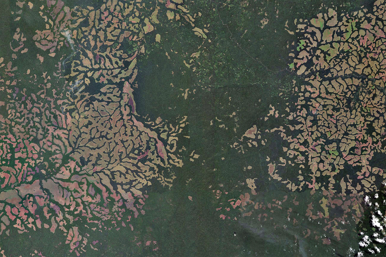Savanna and forest mosaic in the Congo Basin, including recently burned areas. Image courtesy of Microsoft Zoom Earth.