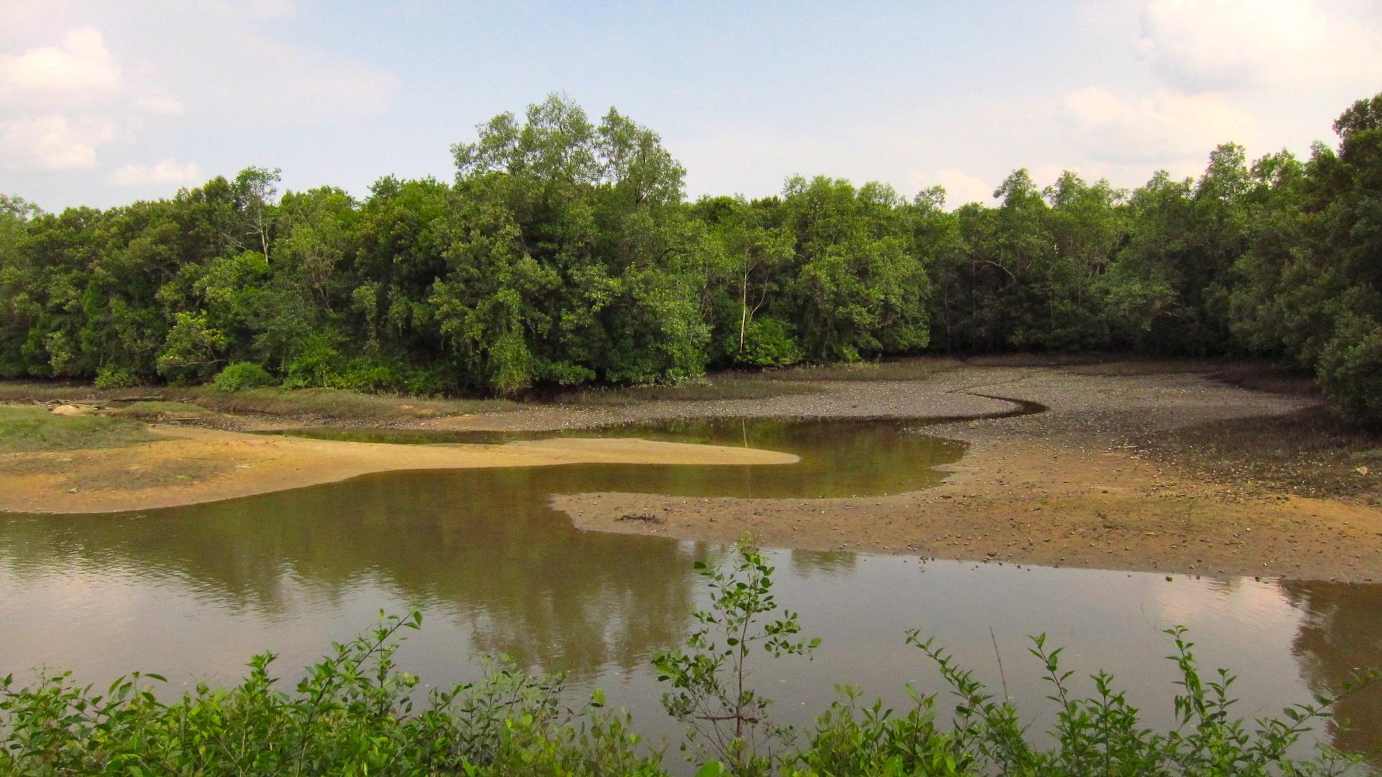Les vasières exposées à marée basse dans la réserve des zones humides de Sungei Bulah offrent un buffet pour les oiseaux. Image de Qingwu Zhou via Wikimedia Commons (CC BY-SA 3.0).