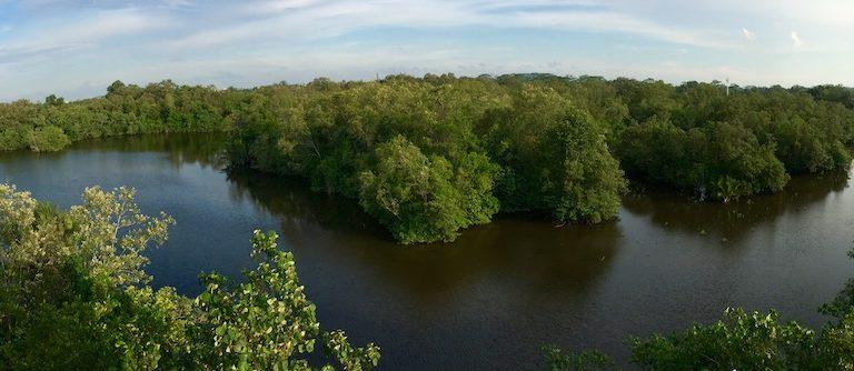 Sungei Buloh Wetlands. Image by Jimmy Tan.