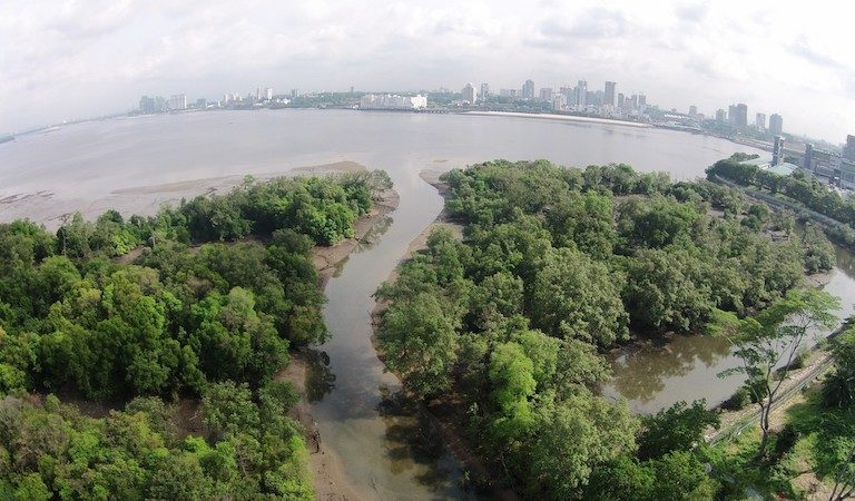 Mandai Mangrove and Mudflat. Image courtesy of Singapore's National Parks Board.