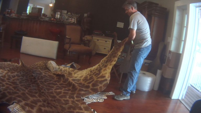 A full giraffe hide for sale at a supplier, African Market's Trophy Room Collection, in Myakka, Florida. Image by HSUS.