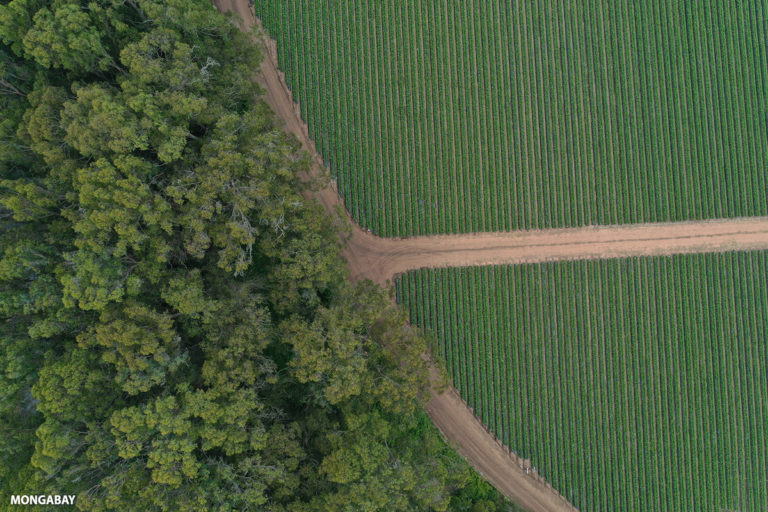 Row crops and trees. Photo by Rhett A. Butler.