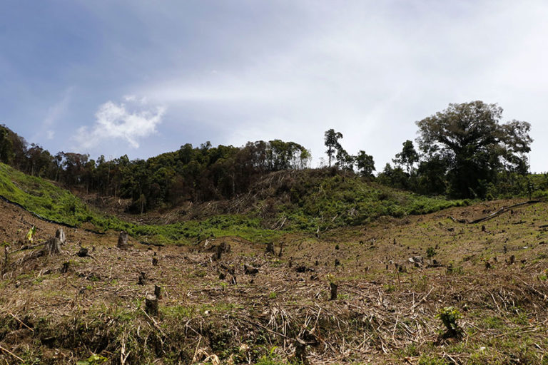 Forest clearing on the periphery of the Leuser Ecosystem in Aceh province, Sumatra. Image by Junaidi Hanafiah/Mongabay Indonesia.
