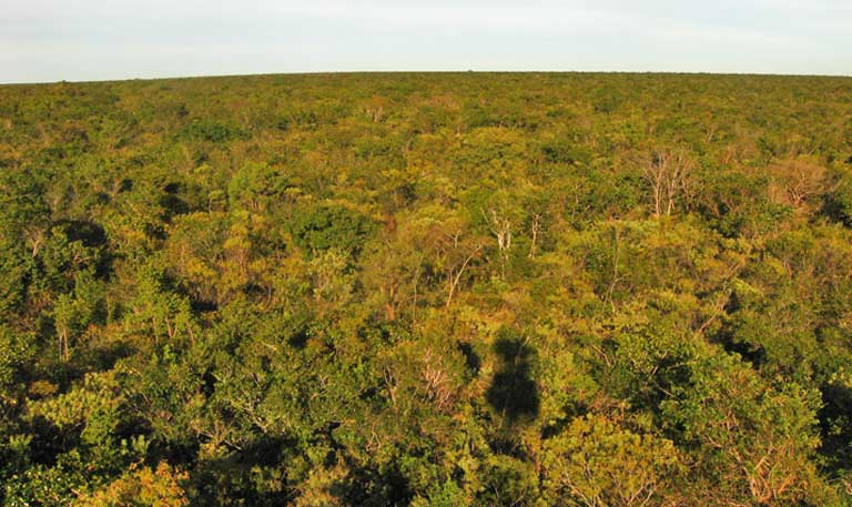 When compared to the Amazon rainforest with its immense trees, the Cerrado can appear dull, but the savanna is home to more than 10,000 plant species and is one of the world's biodiversity hotspots. Image by Guilherme Ferreira/Instituto Biotrópicos.