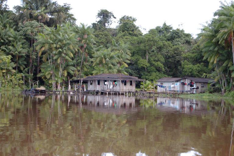 Açaí palms along the Rio Pacaja. © Sir Ghillean Prance