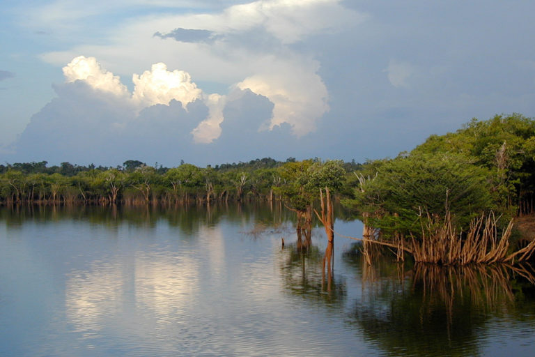 Flooded forest along the Rio Negro. © Sir Ghillean Prance