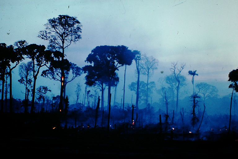 Amazon forest on fire. © Sir Ghillean Prance