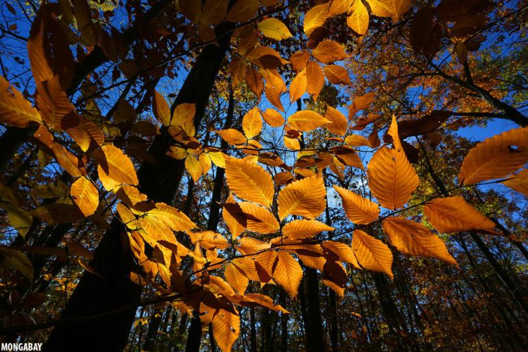 Pittsfield State Forest, Massachusetts. Photo by Rhett A. Butler for Mongabay