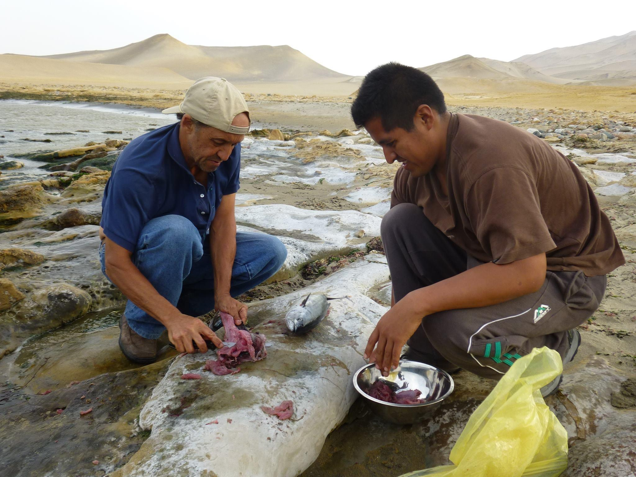 Oscar Beingolea with his friend Bel Tinco in the field in Paracas, on Peru's central coast where they often trapped North American migrant peregrines. Here they are preparing fish they caught for lunch. Photo from Beingolea's Facebook page via Nico Arcilla.