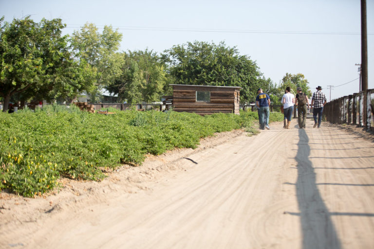 Farm supported by Food Commons near Fresno, California. Photo courtesy of the 11th Hour Project.