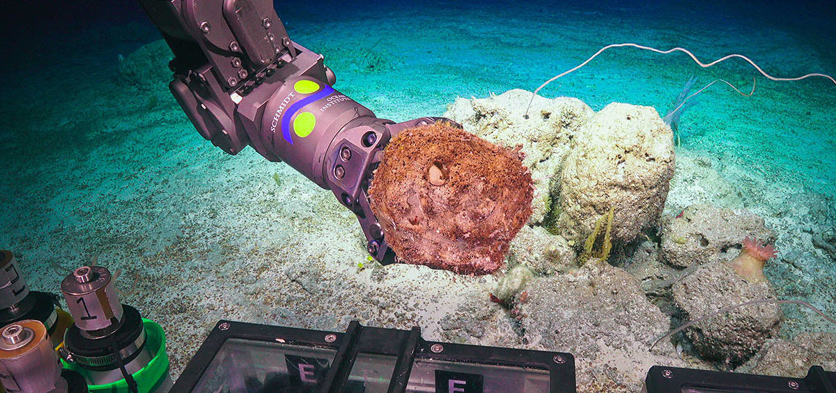 The ROV SuBastain with careful guidance by its pilots uses the manipulator arm to collect a geological sample at 500m on Flinders Reef. Photo credit: Schmidt Ocean Institute