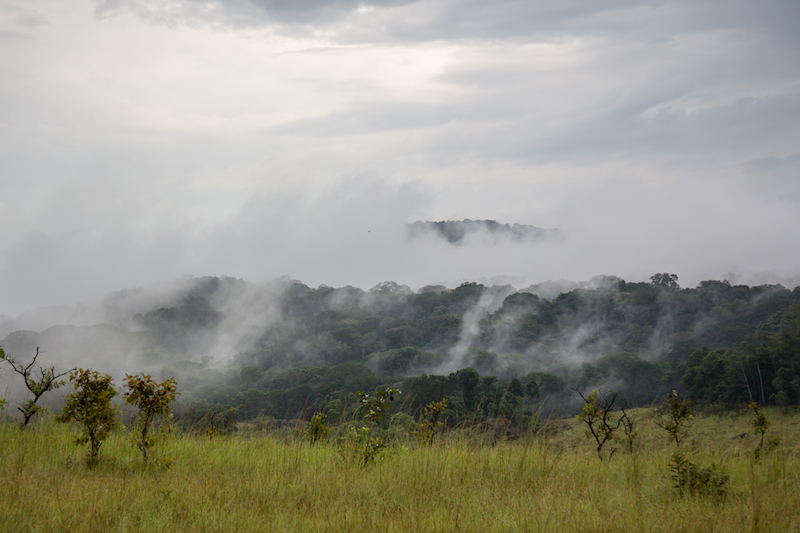 Lopé National Park, Gabon. Image by Nathalie Bertrams for Mongabay.