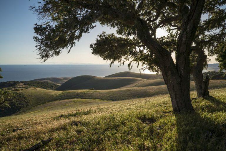 Coast oak woodlands along a ridge overlooking rolling hills that descend to the Pacific Ocean on the Dangermond Preserve. © Bill Marr/TNC