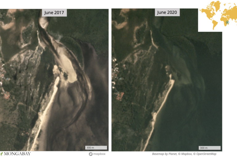 Satellite imagery shows what appears to be mangrove regrowth near Gazi, Kenya.