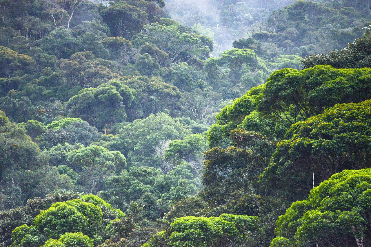 Restauração de áreas degradadas pode salvar 70% das espécies animais ameaçadas de extinção