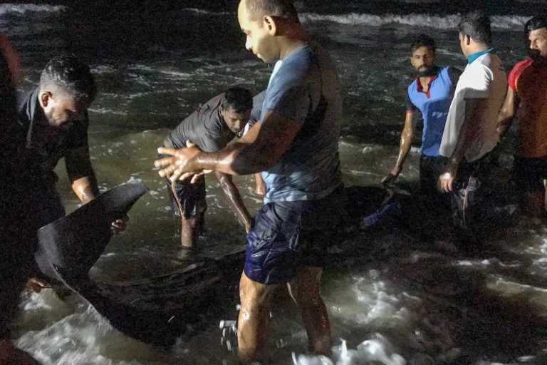 The rescuers trying to pull a beached pilot whale under the headlights of jeeps. Image courtesy of Asha de Vos.