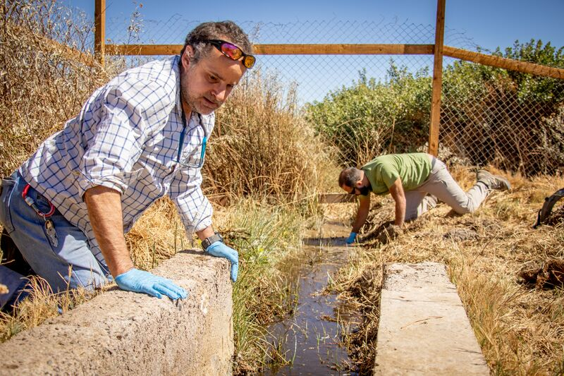 Researchers search for Loa water frogs during their rescue mission near Calama, Chile in July 2019. Andres Charrier, a herpetologist from the Chilean Herpetological Association, and Claudio Soto Azat, co-chair of the IUCN SSC Amphibian Specialist Group Chile shown in the photo. Photo by the Ministry of Housing and Urbanism of Chile.