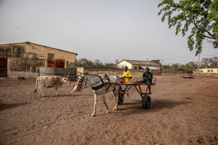 Horse and donkey carts are used to transport timber from the forests in Njorna commune across the border into the Gambia. ©Jason Florio/United Purpose