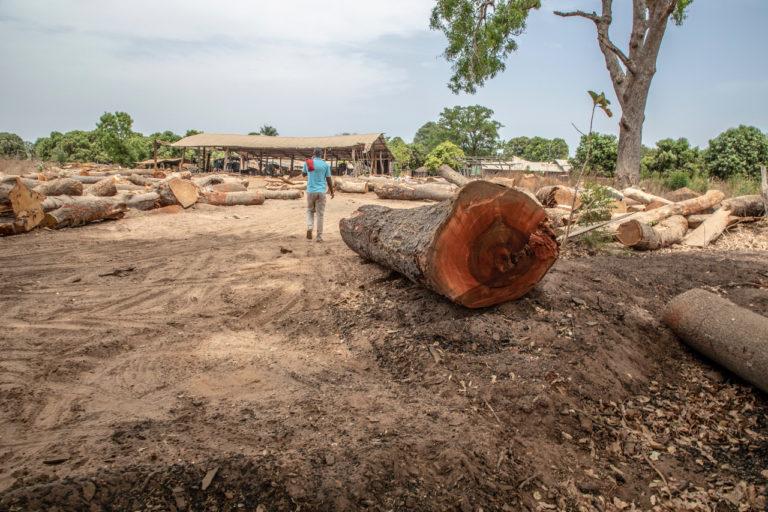 Large timber yard on Rout N4 East of Bignona, Senegal. ©Jason Florio/United Purpose.