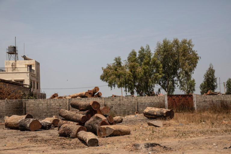Piles of timber illegally logged in Senegal await processing in the Gambia. ©Jason Florio/United Purpose.
