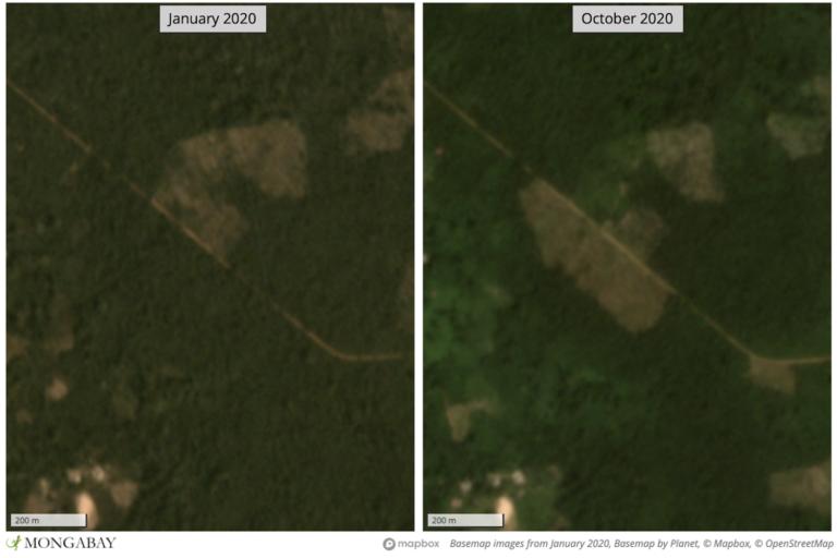 Deforestation in Ziguinchor, Senegal.