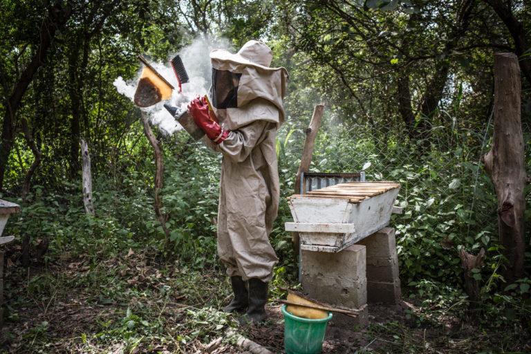 Bee keeping project in Koudioube village, Senegal. ©Jason Florio/United Purpose.