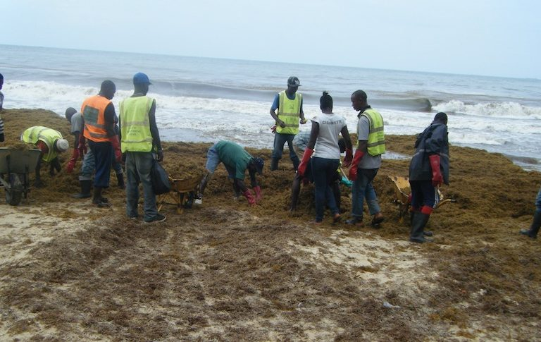 Clearing beached Sargassum in Sierra Leone. Image courtesy Environmental Protection Agency – Sierra Leone