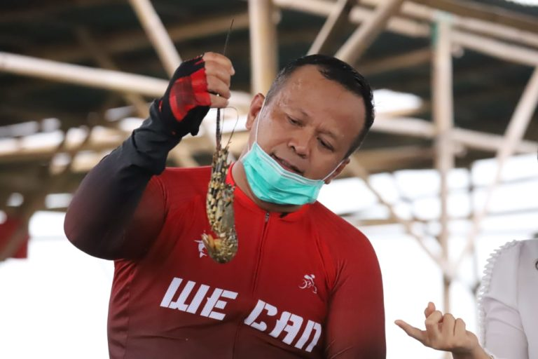 Indonesian former fisheries minister jailed for bribery in lobster exports