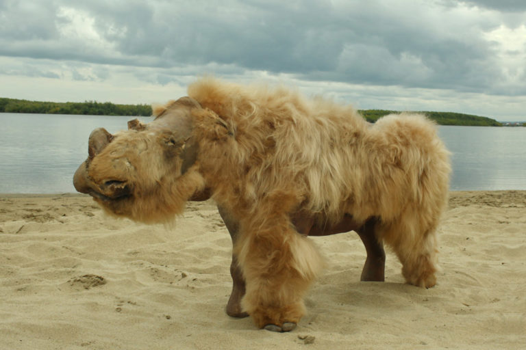 Recreation of a wooly rhino made from a preserved baby wooly rhino discovered in Siberia. Photo credit: Albert Protopopov