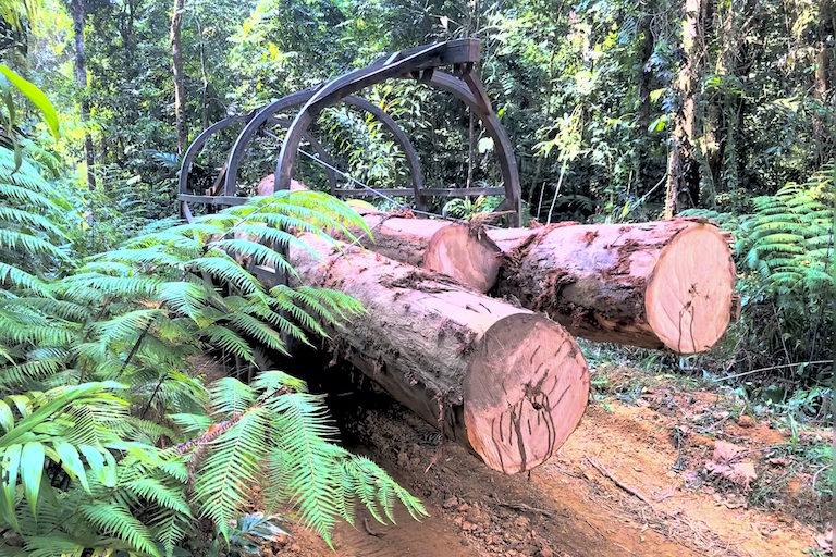 Loggers transport felled native trees from the Cardamom Mountains. Photo courtesy of Marcus Hardtke.