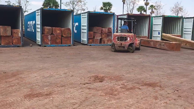 Roughly hewn logs from the Cardamoms are placed in containers for shipment. Photo courtesy of Marcus Hardtke.