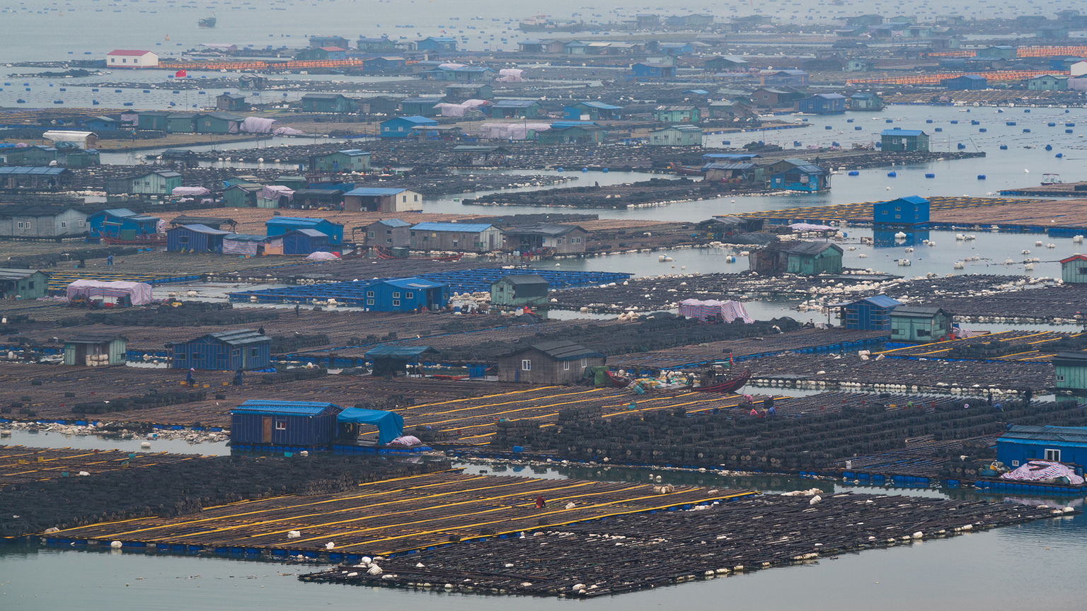 Floating sea farms off the coast of Xiapu, China. Photo credit: Alex Berger