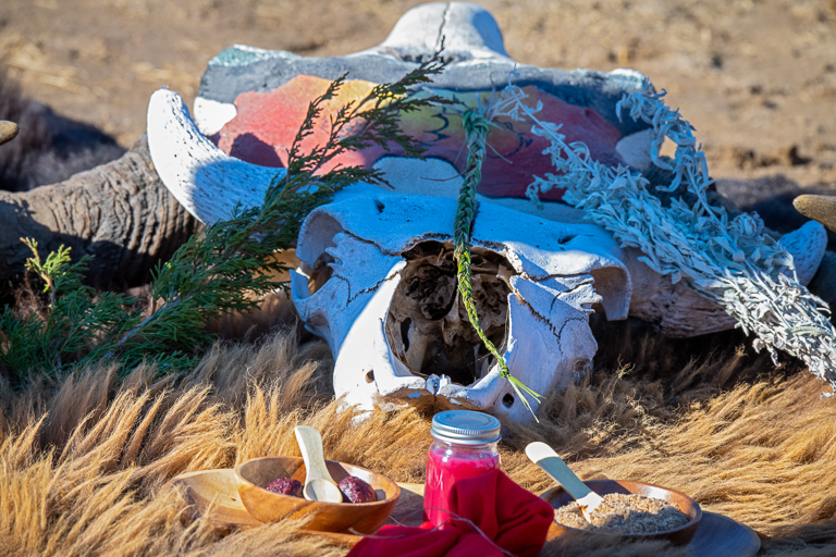 A buffalo skull sits on the plains where a group of people welcomed the bison back to the Rosebud reservation. Image © Clay Bolt/WWF.