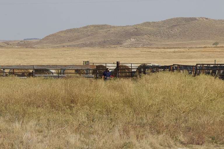 Crews prepare for the Oct. 30 release of the bison. Image © Stephanie Morgan.