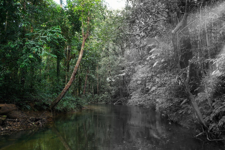 Rainforest in Indonesian Borneo. Photo credit: Rhett A. Butler.