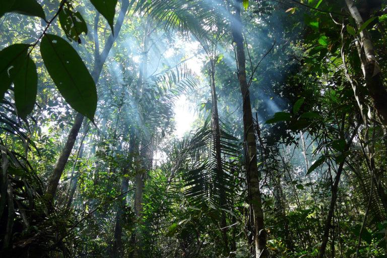 Rainforest in Brazil. Photo © Antoine Grimaud