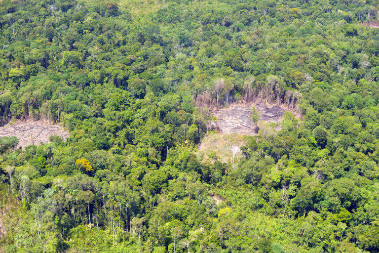 Small-holder deforestation in French Guiana. Photo © Didier Gentilhomme.