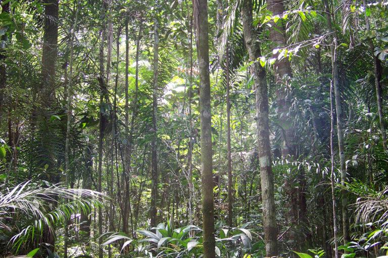 Brazilian rainforest. Photo © Antoine Grimaud.