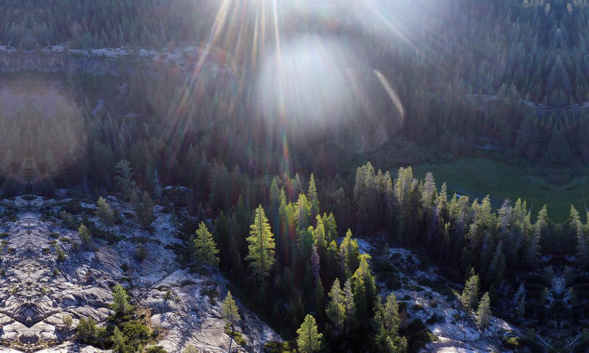 Pine forest in the Sierra Nevada. Photo by Rhett A. Butler / mongabay
