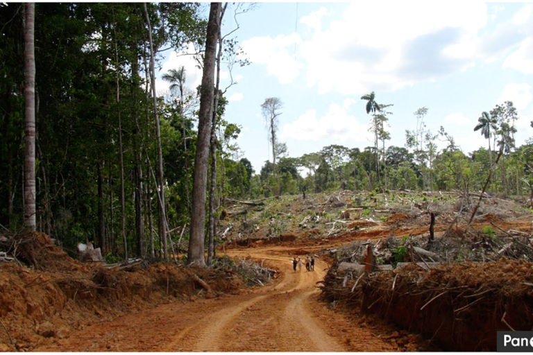 Deforestation on the United Cacao plantation in 2013. Photo by Leoncio Ramirez via Panoramio.