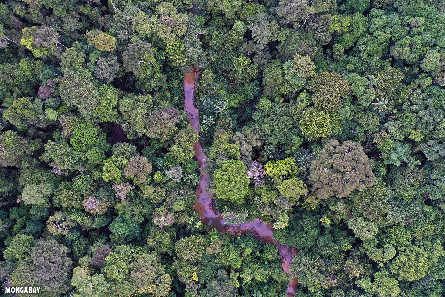 Rainforest creek in the Colombian Amazon