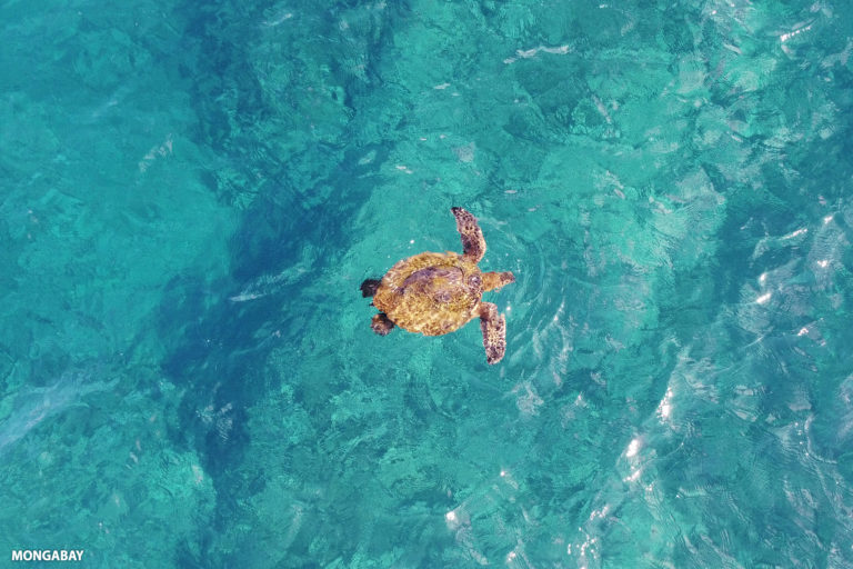 Sea turtle in the Pacific.