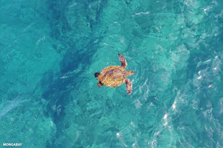 Sea turtle in the Pacific.