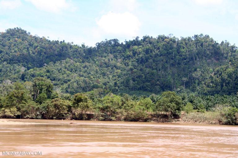 Oil Palm displacing rainforest in Peninsular Malaysia. Image by Rhett A. Butler/Mongabay.