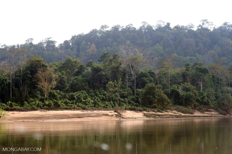 Rainforest along the Tembeling River in Pahang, Malaysia. Image by Rhett A. Butler/Mongabay.